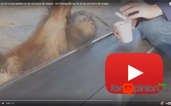orangutan truco de magia